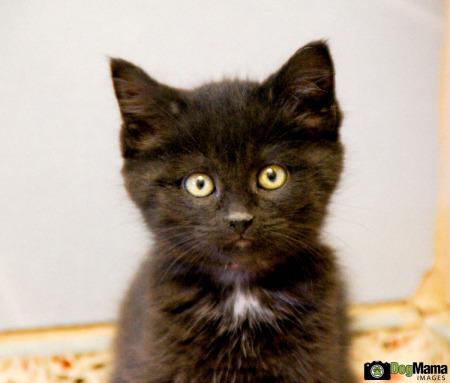 Kitten, AHS