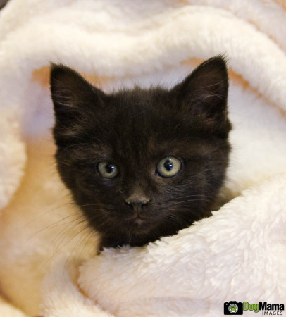 Kitten #1, AHS